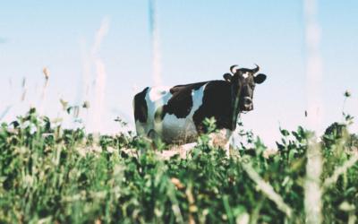 De quoi sont composées les protéines de lait ?